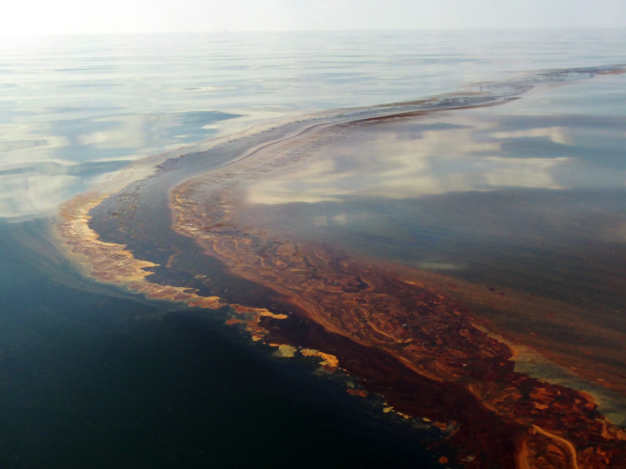 oil degrading bacteria Of the diverse range of oil-degrading bacteria isolated to date, less than a quarter have been obtained from marine sources strains from only 19 genera of eubacteria could — through their obligate requirement for nacl-containing growth media — be characterized as indigenous marine organisms ().